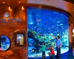 Enjoy Celebrity Radio's Shark Reef Aquarium At Mandalay Bay Las Vegas…. Another rare gem in Las Vegas is the Shark Reef at Mandalay Bay. Shark […]