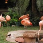 Flamingo's at Flamingo Casino Las Vegas 3