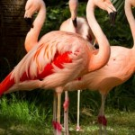 Flamingo's at Flamingo Casino Las Vegas Animal Habbitat