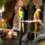 Parrots & Flamingo's at Flamingo Casino Las Vegas 3