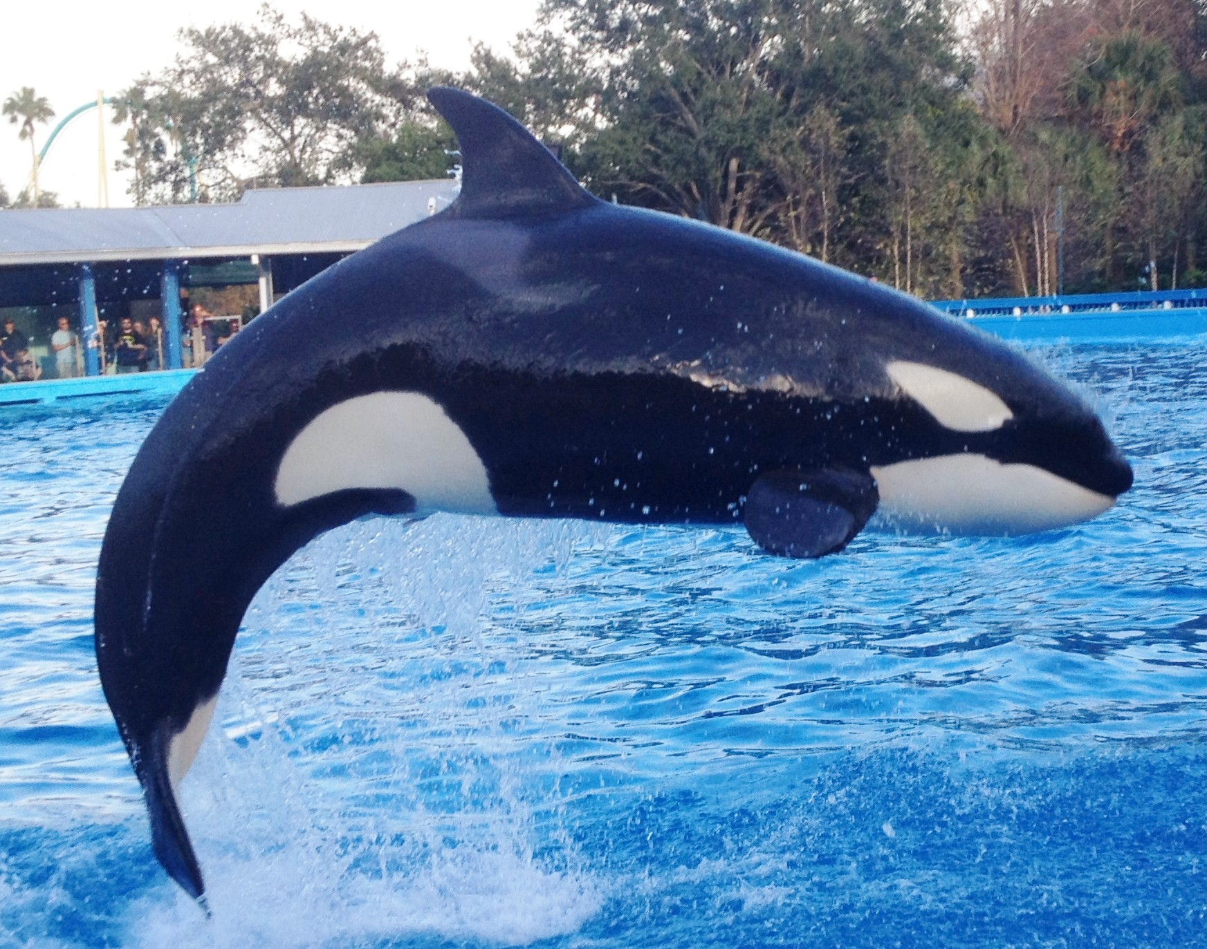 Enjoy Celebrity Radio's SeaWorld Review Orlando Florida: You cannot visit Orlando, Florida without taking time to visit the world famous SeaWorld. This attraction is home […]