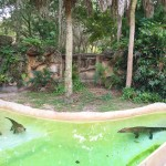 Miami Zoo Review Pictures and video (5)
