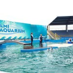 Killer Whale Show review orca Miami Seaquarium