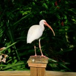 Miami Zoo Review 2016