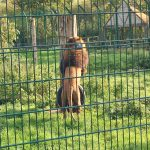 review-blackpool-zoo-lions