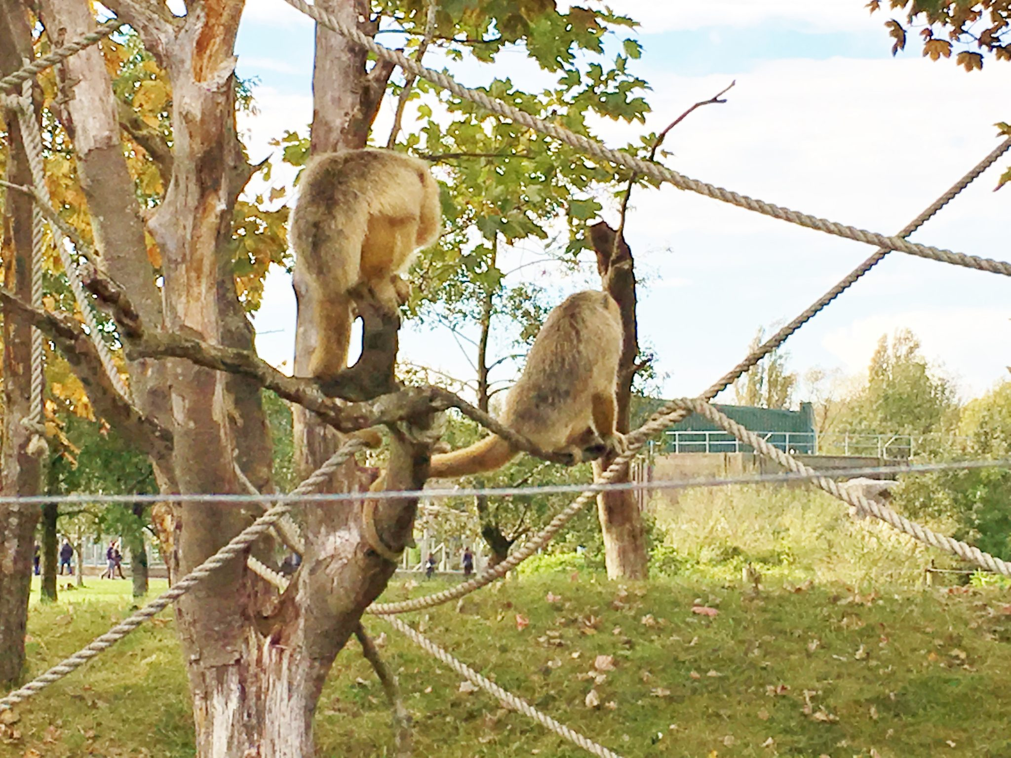 review blackpool zoo