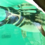 review-blackpool-zoo-penguins