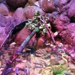 review-sealife-centre-blackpool-1