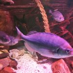 review-sealife-centre-blackpool-10