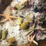 review-sealife-centre-blackpool-11