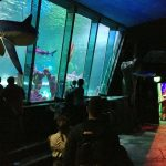 review-sealife-centre-blackpool-14