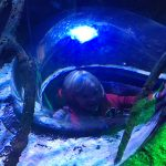 review-sealife-centre-blackpool-6