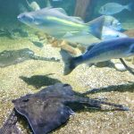 review-sealife-centre-blackpool-7
