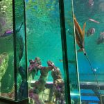 review-sealife-centre-blackpool-9