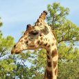 Enjoy Celebrity Radio's Review Naples Zoo…. Naples Zoo is a lovely day out for all of the family. With stunning grounds and a huge array […]